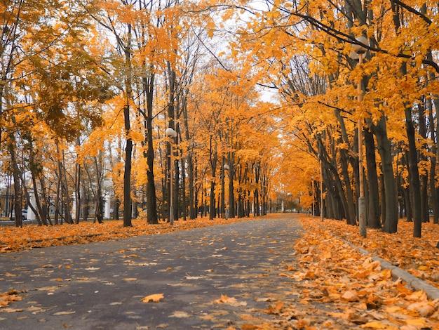 Parque de otoño con espacio para diseño, carretera y fondo borroso