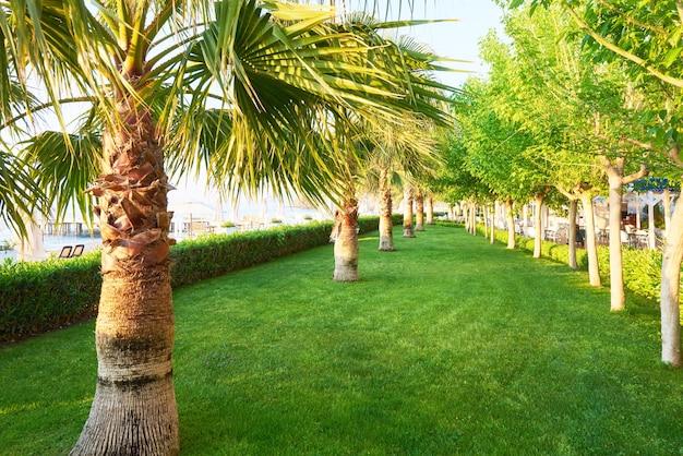 Parque de palmeras verdes y sus sombras sobre el césped.
