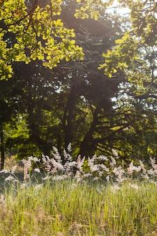 Parque con robles gigantes en un vecindario suburbano en summer grass meadow
