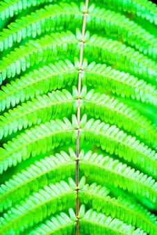 Parque tropical primer de la planta verde