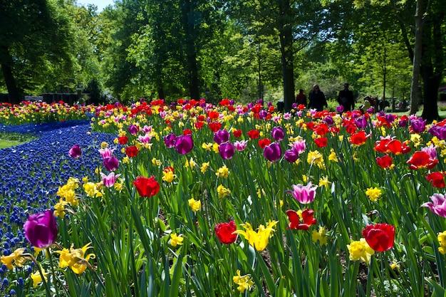 Parque de tulipanes