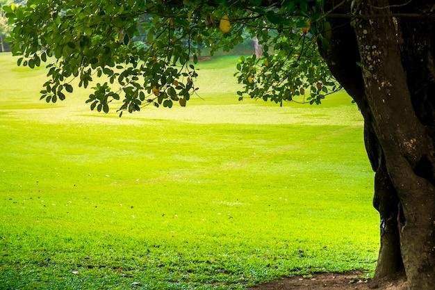Parque verde de la ciudad con árboles. fondo de la naturaleza