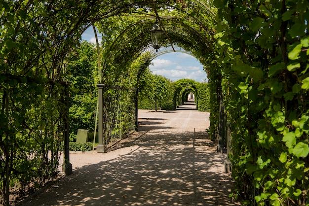 Parque verde en día soleado de verano.