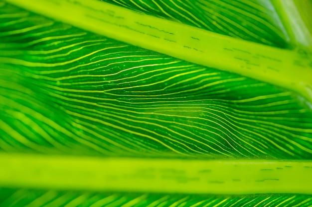 La parte posterior de las hojas verdes con hermosos diseños.