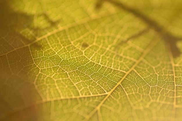 Parte del primer de la hoja verde