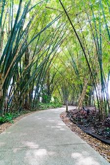 Pasarela con bambú