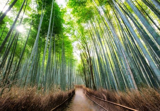Paseo en el bosque de bambú a la sombra con luz solar en arashiyama