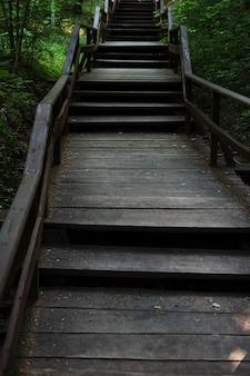 Paseo por el bosque camino de madera por el bosque.