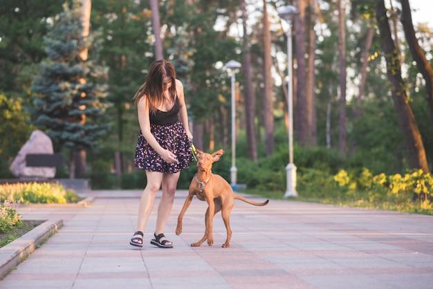 Paseo nocturno con un perro en el parque. mujer caminando con un perro en un paseo por un bosque