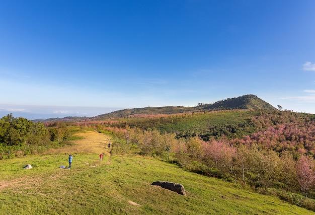 Paseo turístico y toma una foto en la colina con flores de sakura.