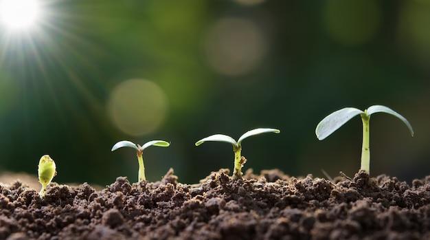 Paso cada vez mayor de la plántula en jardín con luz del sol. concepto eco