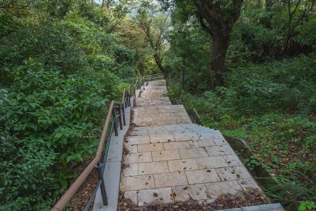Paso de piedra o escalera, pasarela en el bosque verde