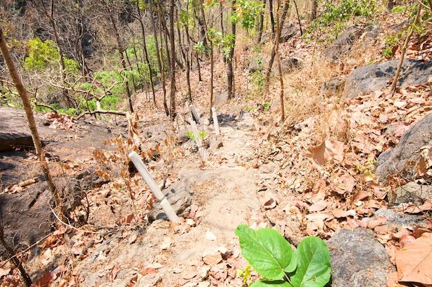 Pasos de piedra en el bosque dipterocarp en la montaña, op luang national park, hot, chiang mai