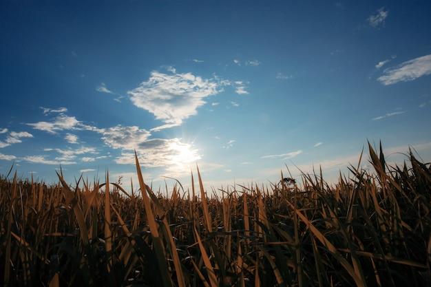 Pastizales con puesta de sol en el cielo azul.