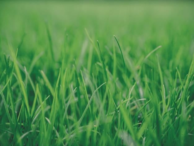 Pasto verde iluminado por el sol ambiente natural auténtico prado