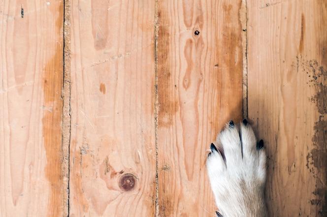 Pata de perro durmiendo sobre suelo de madera