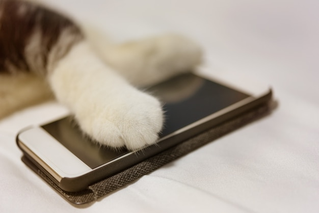 Las patas del gato tocan el teléfono inteligente en la cama blanca