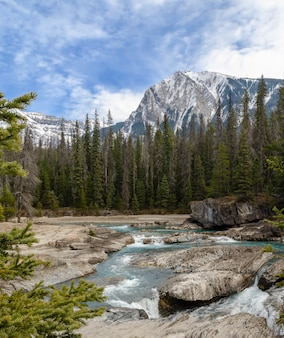 Patear el río horse en el puente natural en el parque nacional yoho, columbia británica, canadá