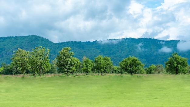 Patio verde con montaña y cielo azul