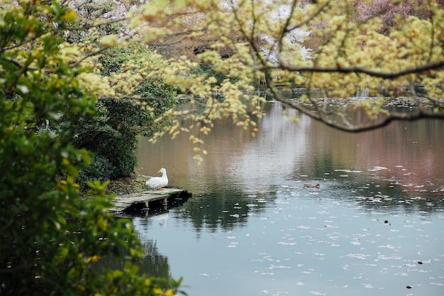 Pato y lago