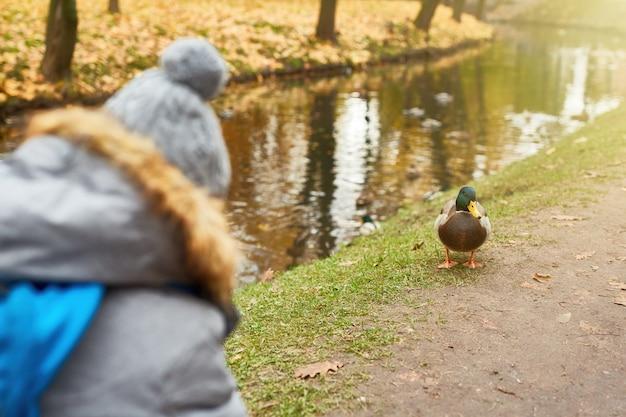 Pato por orilla