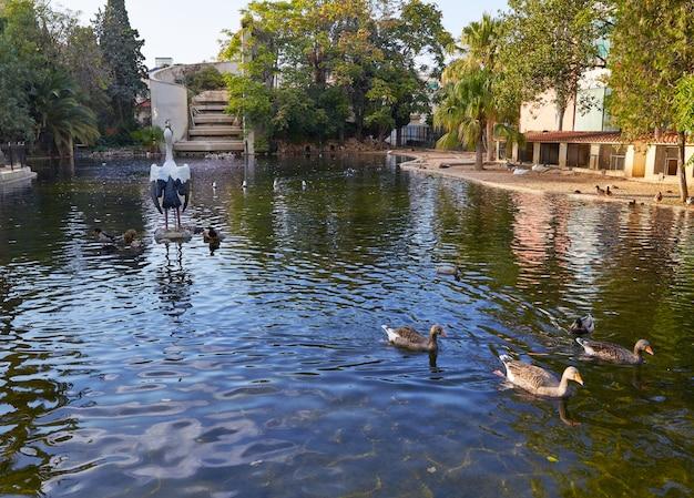 Patos en el parque viveros de estanque de valencia.