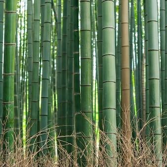 Patrón de bosque de bambú
