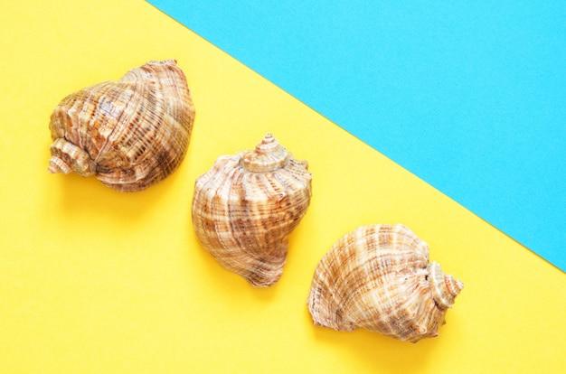 Patrón de conchas de mar sobre fondo de papel turquesa y amarillo. concepto de verano