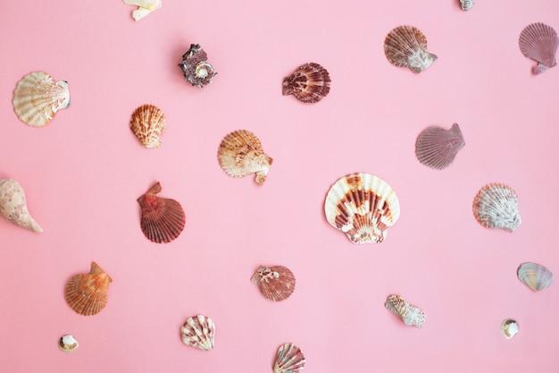 Patrón de conchas marinas