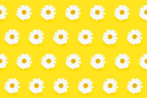 Patrón sin costuras de verano. flores de margarita blanca sobre fondo amarillo. endecha plana de verano