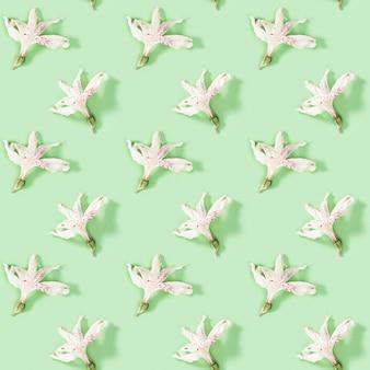 Patrón creativo regular sin fisuras con capullo de alstroemeria flor blanca seca.