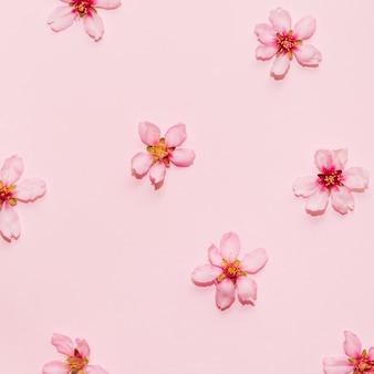 Patrón de flor de cerezo sobre un fondo rosa