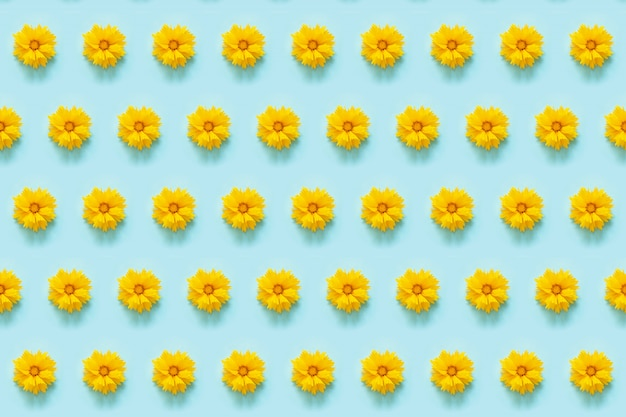Patrón de flores. flores amarillas naturales sobre fondo azul.