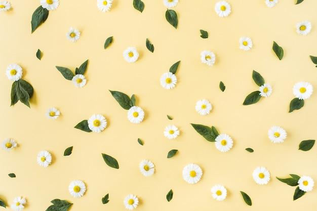Patrón de flores de margarita de manzanilla blanca sobre superficie amarilla