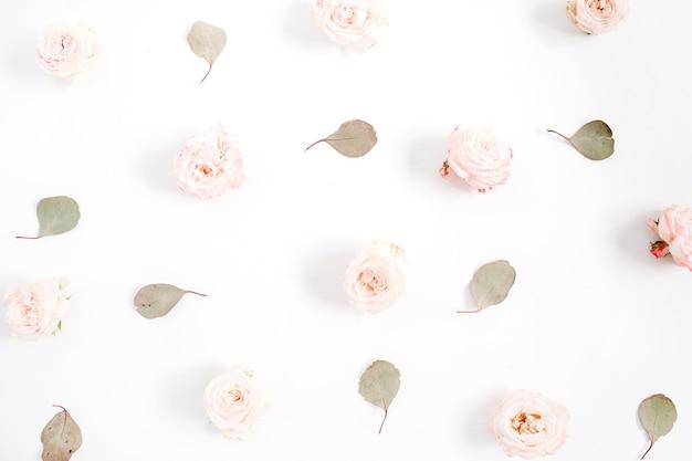 Patrón de flores de rosas beiges, hojas de eucalipto sobre fondo blanco. endecha plana, vista superior