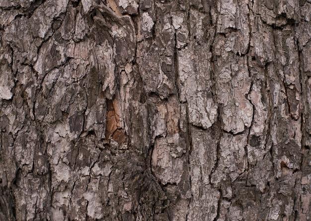 Patrón de fondo de textura de árbol de madera vieja