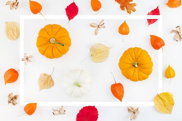 Patrón hecho de calabazas flores secas y hojas