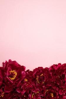 Patrón de hermosas peonías rojas aromáticas frescas en rosa