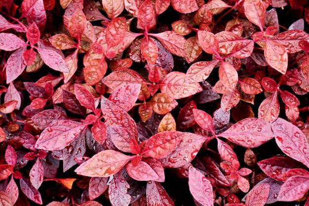 Patrón de hoja pequeña roja en la naturaleza.