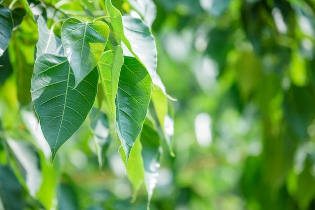 Patrón de hoja verde