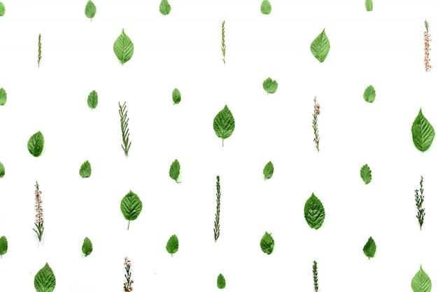 Patrón con hojas y pétalos, aislado en blanco