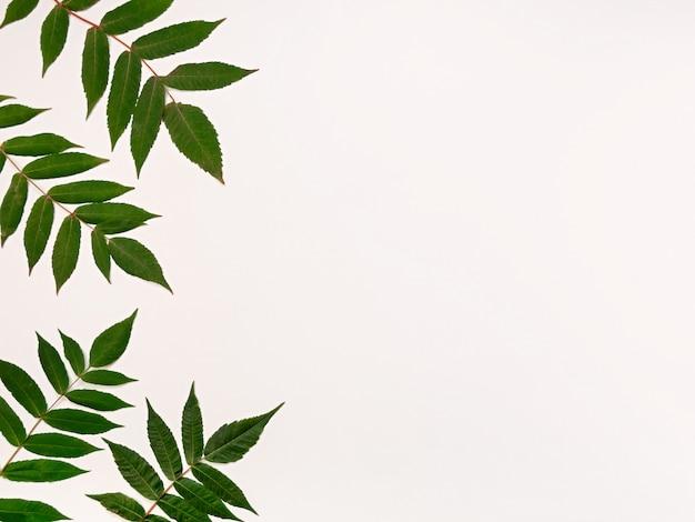 Patrón de hojas verdes sobre un fondo blanco.