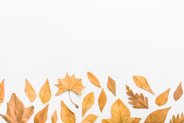 Patrón de lado inferior de hojas de otoño