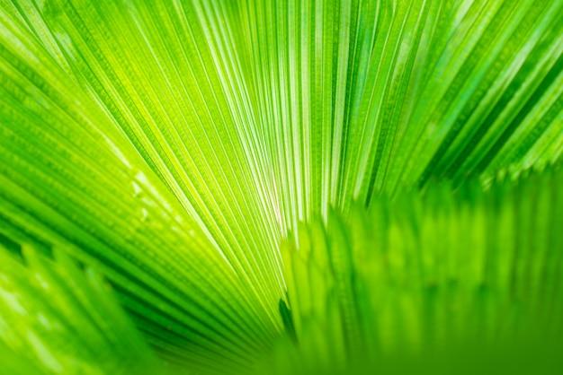 Patrón de líneas rectas de hojas verdes frescas.