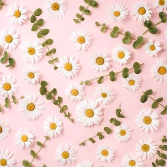 Patrón de manzanilla, pétalos, hojas en rosa.