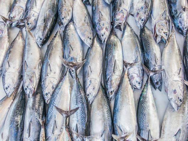 Patrón de peces, patrón de atún