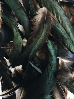 Patrón de plumas de pájaro