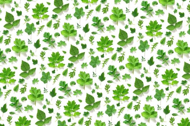 Patrón de varias hojas verdes naturales sobre una superficie blanca, como telón de fondo o textura