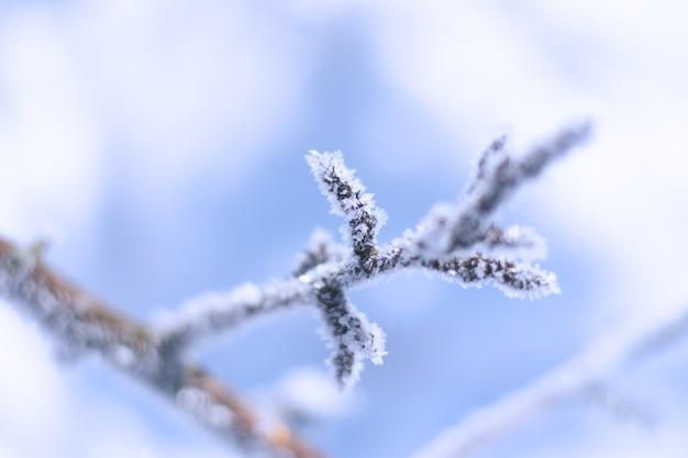 Patrones de nieve en plantas en detalle de invierno