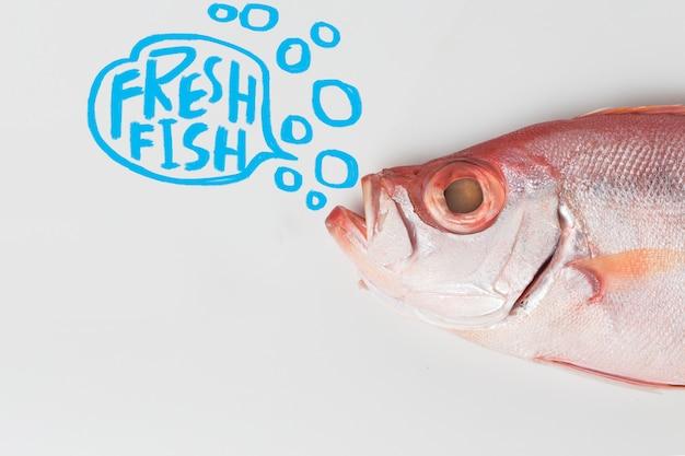 Patudo pescados aislado en el fondo blanco